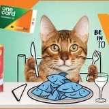 Win a $3,500 Cash for Dining Experience fo You and Your Cat