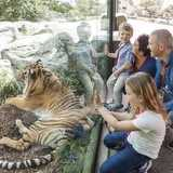 Win a Family pass to Auckland Zoo Open Lates