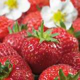 Win a strawberry planting pack