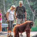 Win a trip to Borneo