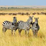 Win-an-African-Safari-adventure---essential-need-