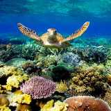 Win-an-escape-to-the-Great-Barier-Reef-