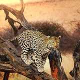Win-the-best-African-safari-adventure-